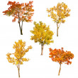 Set of five autumn trees isoalted on white — Stock Photo