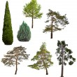 Set of seven coniferous trees isolated on white — Stock Photo #36749149