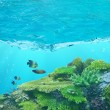 Stock Photo: Four fishes and cay under blue water