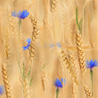 Blue flowers in golden wheat — Stock Photo