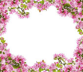 Apple tree pink flower branches frame — Stock Photo