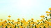 Yellow buttercup field under sun — Stock Photo