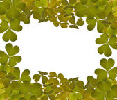 Green trefoil leaves frame on white — Stock Photo