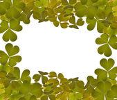 Green trefoil leaves frame on white — Stock Photo