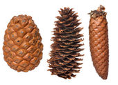 Set of three cones isolated on white — Stock Photo