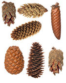 Set of seven cones isolated on white — Stock Photo