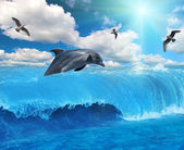 Grey dolphin and seagulls — Stock Photo