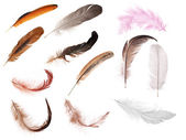 Set of twelve isolated feathers — Stok fotoğraf