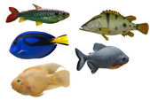 Set of five fishes isolated on whit — Stock Photo