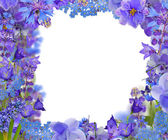 Frame fronm blue flowers on white — Stock Photo