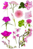Set of twelve pink color flowers on white — Stock Photo