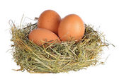 Three eggs in grass nest on white — Stock Photo