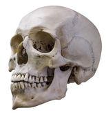 Isolated single human skull — Stock Photo