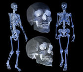 Human skeletons set isolated on black — Stock Photo