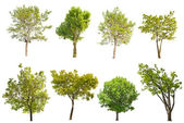 Set of eight green trees isolated on white — Stock Photo