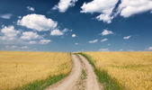Country road in gold wheat field — Stockfoto