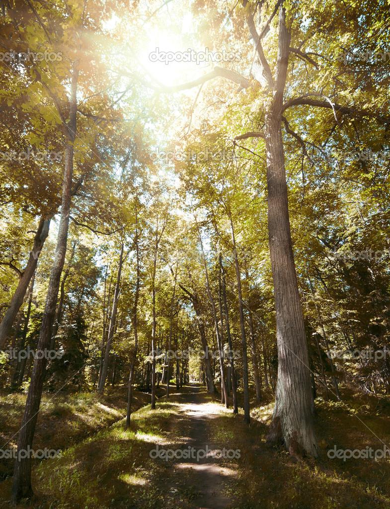 Фотообои Footpat между деревьев в осеннем лесу