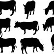 Nine cows silhouettes isolated on white — Imagen vectorial