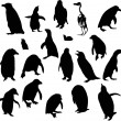 Penguin silhouettes collection isolated on white — Stock Vector