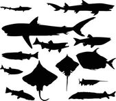 Thirteen fish silhouettes collection isolated on white — Stock Vector