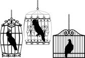 Collection of birds in cages on white — Stock Vector