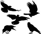 Set of five crow silhouettes isolated on white — Stock Vector