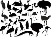 Twenty six bird silhouettes on white — Stock Vector