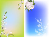 Cherry tree flowers on green and blue background — Stock Vector