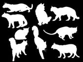 Nine white cats on black — Stockvector