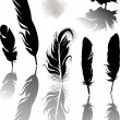 Seven feathers with shadows isolated on white — Stock Vector #36750229