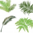 Green fern and palm leaves isolated on white — Stock Vector