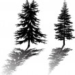 Two fir silhouettes with reflection — Stock Vector