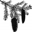 Black fir branch with two cones on white — Stockvector