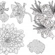 Five garden flowers sketches isolated on white — Stock Vector