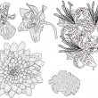 Stock Vector: Five garden flowers sketches isolated on white