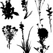 Set of garden flower silhouettes isolated on white — Stock Vector