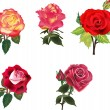 Five isolated red and orange roses collection — Stock Vector #36751769