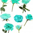 Set of light blue rose flowers isolated on white — Stock Vector