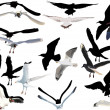 Stock Vector: Gulls collection on white background