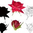 Different styles of red roses isolated on white — Stock Vector