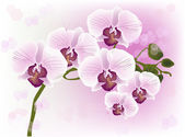 Pink orchids with dark centers on light background — Stock Vector