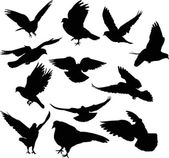 Twelve dove silhouettes isolated on white — Stock Vector