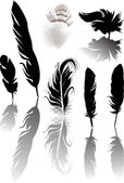 Seven feathers with shadows isolated on white — Stock Vector