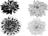Four dahlia sketches isolated on white — Stock Vector