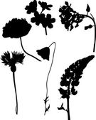 Six wild flowers silhouettes on white — Stock Vector