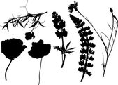 Six wildflowers silhouettes on white — Stock Vector
