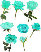 Set van licht blauw roze bloemen geïsoleerd op wit — Stockvector
