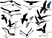 Gulls collection on white background — Stock Vector