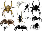 Set of eleven isolated spiders — Stock Vector