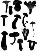 Thirteen mushrooms on white — Stock Vector